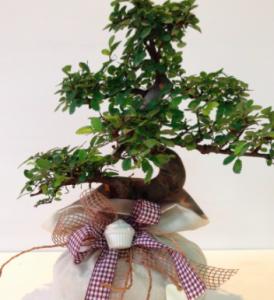 bonsai bomboniera
